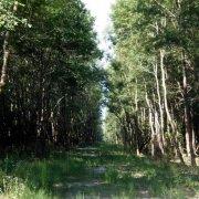 Motovun Forest