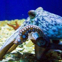Poreč Aquarium