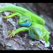 Nacionalni park Sjeverni Velebit - Životinjski svijet