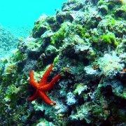 Kamenjak Diving