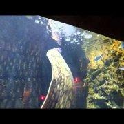 Aquarium  Split ( aquarium split.com )