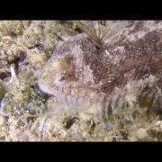 Kroatien Snorkeling and Diving (Karlobag)