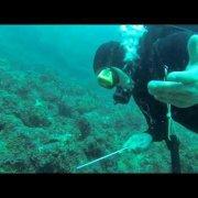 Scuba Diving Pula 09 2013