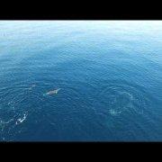 Dolphins Vrbnik, Island Krk, Croatia