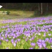 Nacionalni park Sjeverni Velebit - Biljni svijet