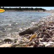 Sakarun (Saharun) - Dugi otok [HD]