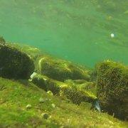 Savudrija Underwater