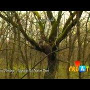 Natural Heritage - Kopački Rit Nature Park