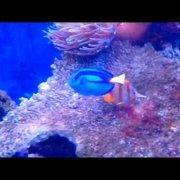 Aquarium Sibenik Хорватия | Мини океанариум