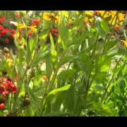 The Tale of the Botanical Garden, Zagreb, Croatia, June 2014 2 SD 480p